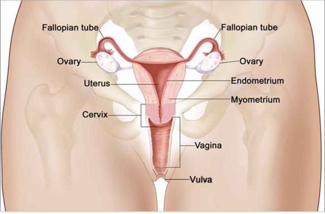 Obstetrics and Gynecology Krok 2